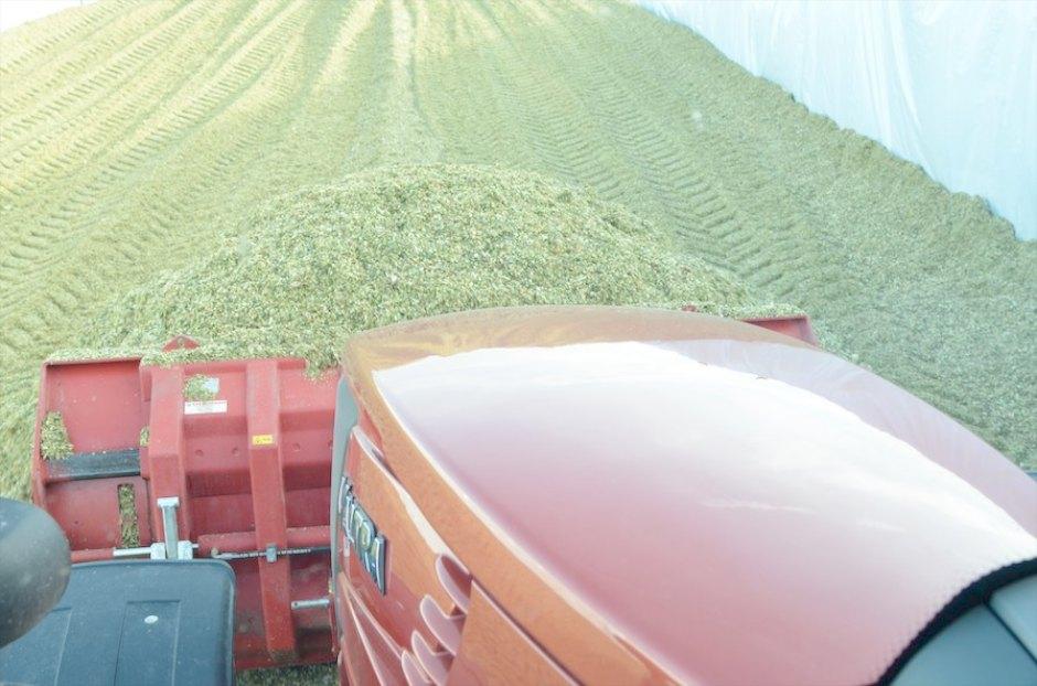 Maisschild