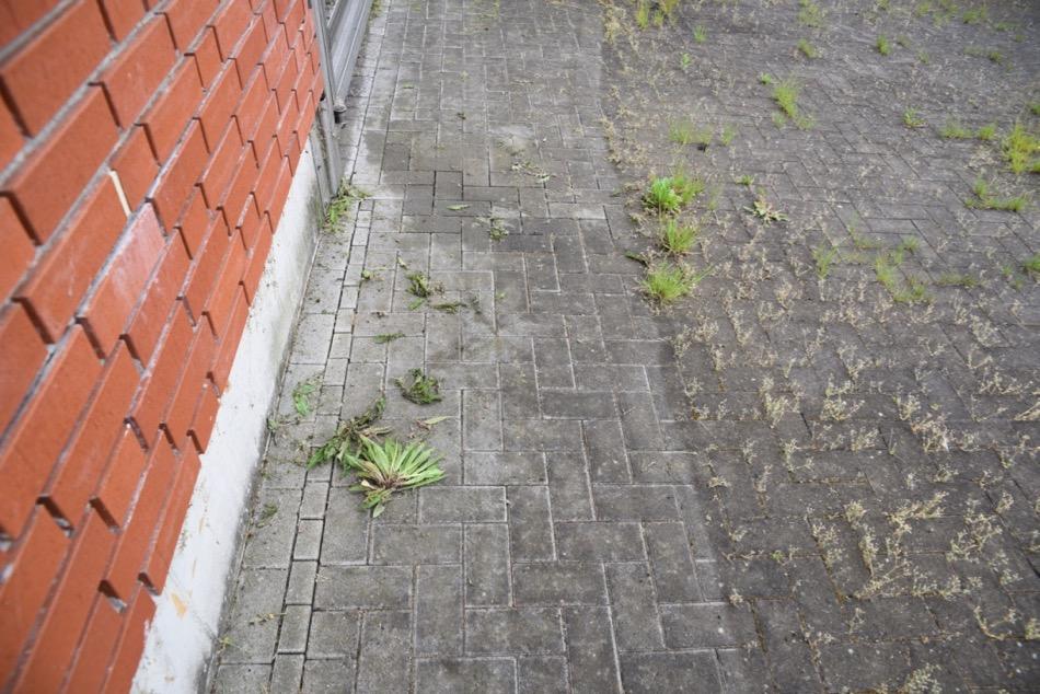 Wildkrautbürste